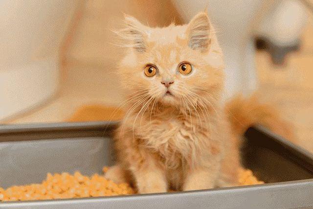 Как приучить котенка ходить в туалет - список методов