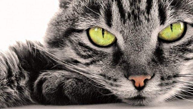 6 причин почему кошка рвет каждый день - что делать и как лечить