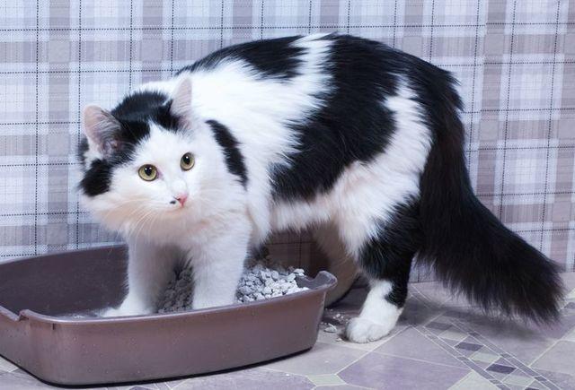 5 причин, почему кошка гадит где попало - что делать