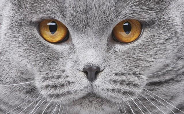 Можно ли кастрировать кота в 2 года и почему