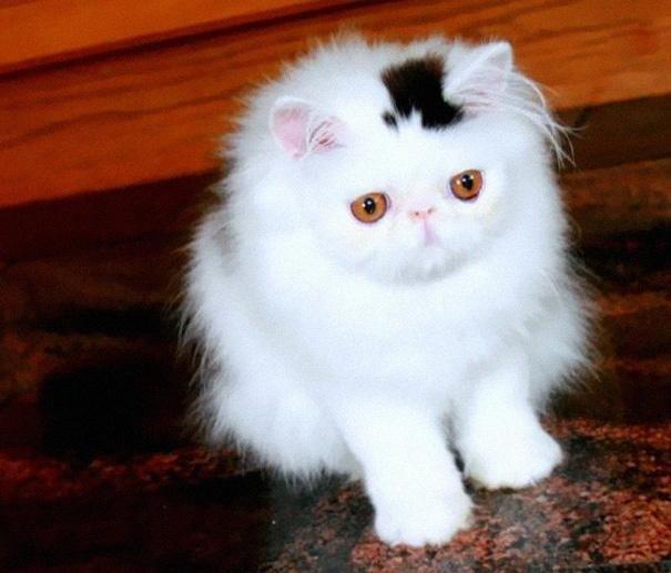 Необычные окрасы кошек - фото, название и описание
