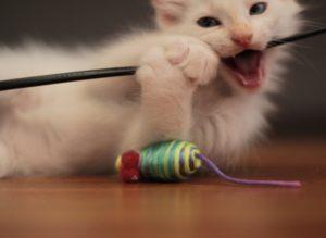 Как отучить кота кусаться и царапаться