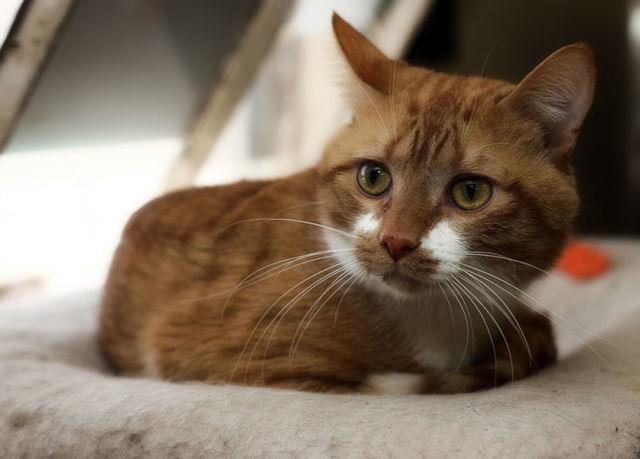 Протеин для кошек: инструкция по применеию