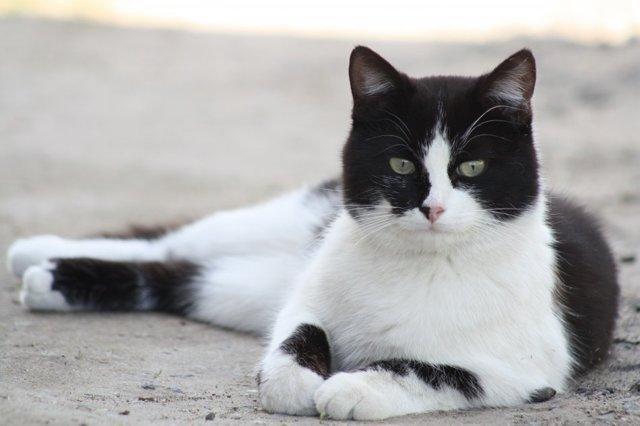 Можно ли кастрировать кота в 3 года и почему