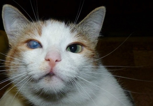 3 причины почему у кошки мутный глаз - симптомы и лечение