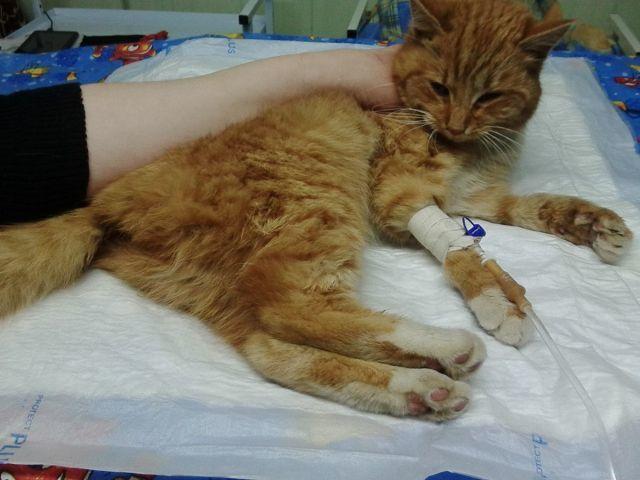 4 причины перелома лапы у кошки - симптомы и лечение