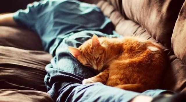 5 причин почему кошки любят спят на человеке