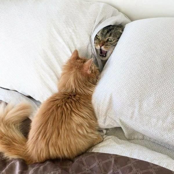 Котенок гадит на кровать - что делать