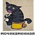 Белок в моче у кота - симптомы, диагностика, лечение