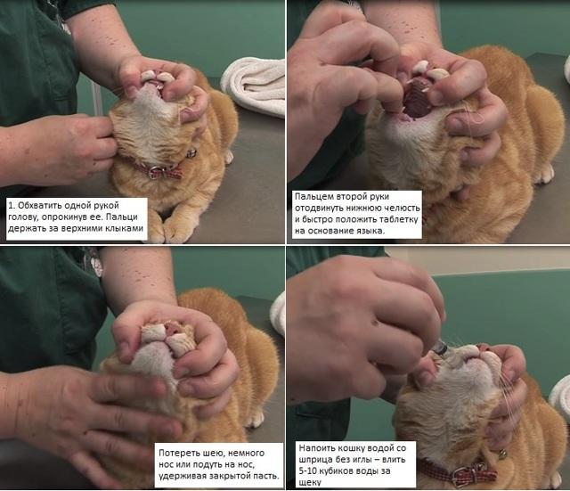 cредство от глистов для котят -