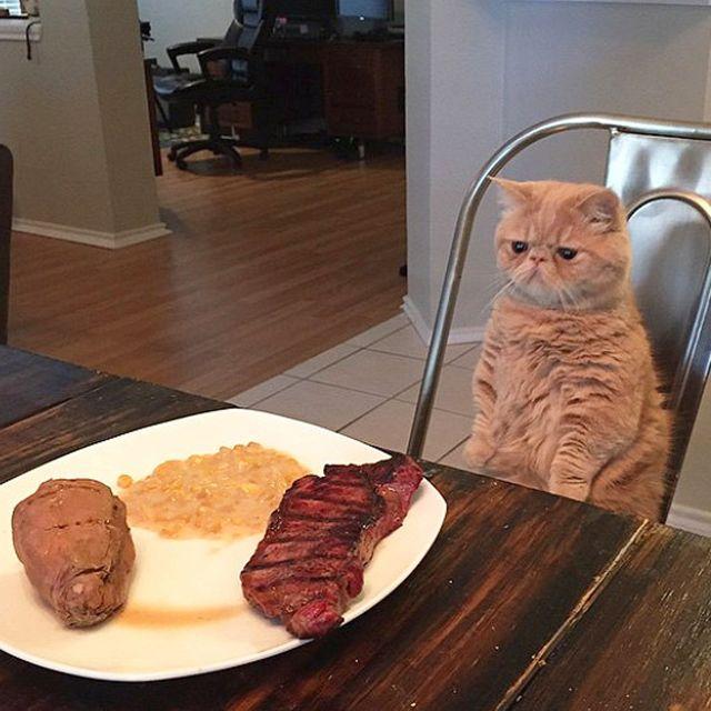 Сырая печень кошке: можно или нет