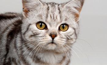 Экзекана для кошек: инструкция по применению