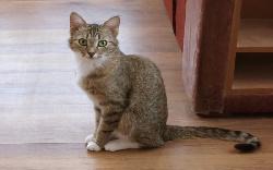 Почему старый кот сильно похудел - причины и симптомы