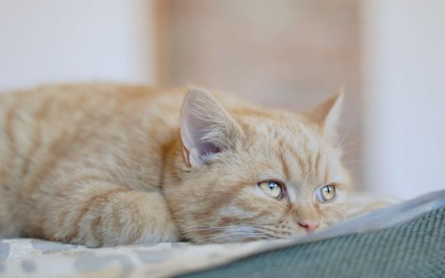 3 причины почему кот не пьет воду - последствия