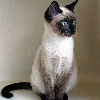 Преднизолон для кошек: инструкция по применению