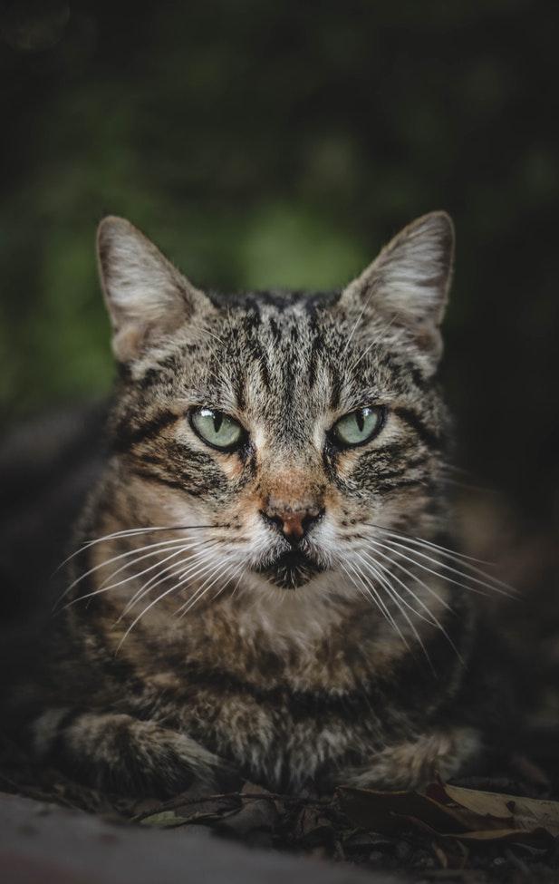 Почему кошки шипят - причины и что делать