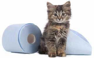 9 причин почему у кота жидкий стул - как лечить