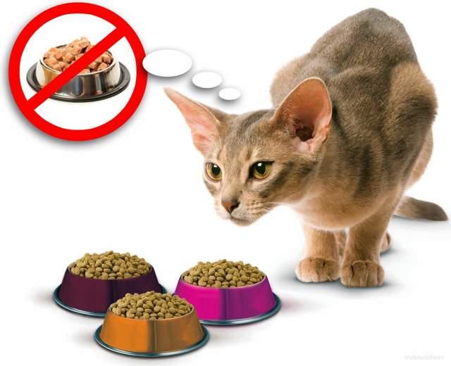 Чем кормить больного кота - основные правила кормления