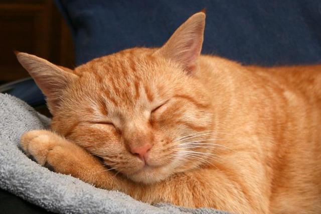 Почему коты мурлыкают - причины и факты