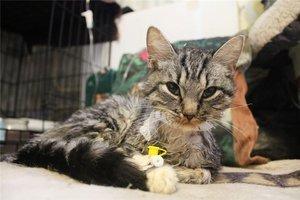 7 симптомов панлейкопении у кошек - лечение, диагностика, формы