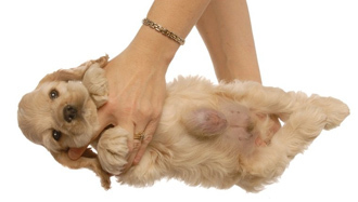 У кошки шишка на молочной железе - что делать