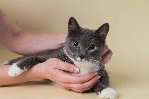 4 причин почему у кота болит зуб - как лечить