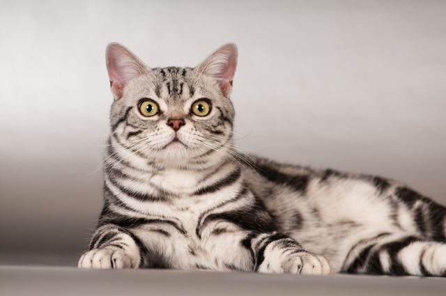 Какую кошку лучше завести для ребенка - описание пород