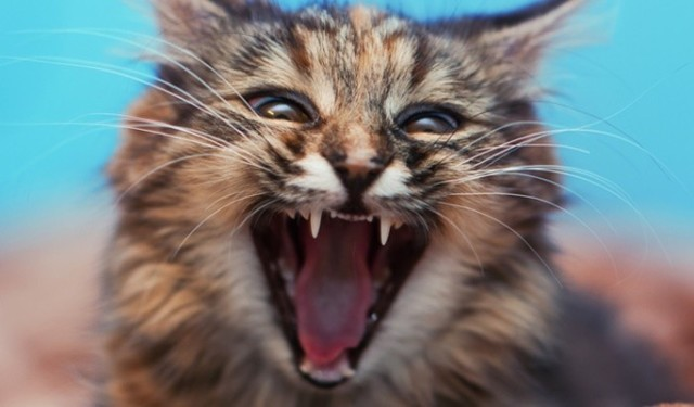 Анализ на бешенство у кошек - цена, где делают?