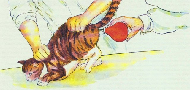 Препараты от глистов для кошек - таблетки, уколы капли