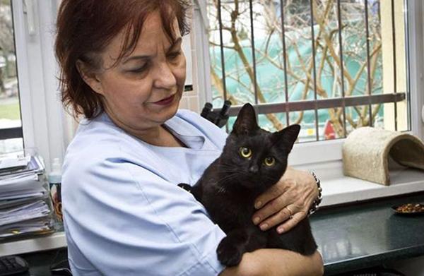 Черные точки на коже у кошки - причины и что делать