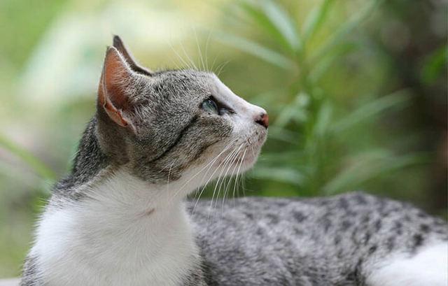 8 причин почему у кота перхоть на спине