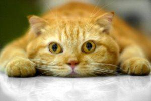Сколько кошка отходит от наркоза после стерилизации и как помочь