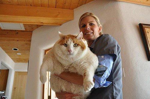 Самый толстый кот в мире - рейтинг котов