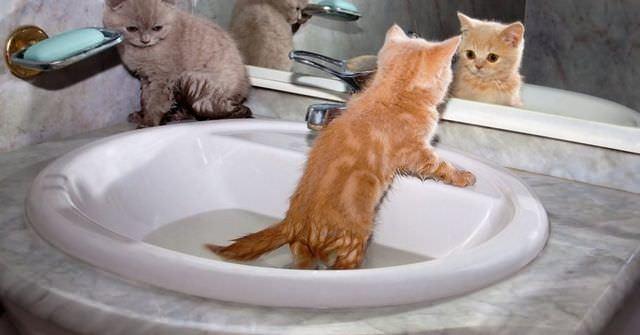 4 причины почему у кошки лысеет живот - лечение и симптомы