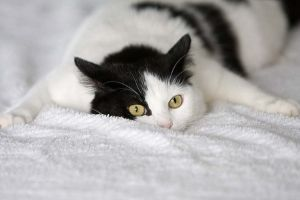 Почему кошка дрожит всем телом - причины и что делать