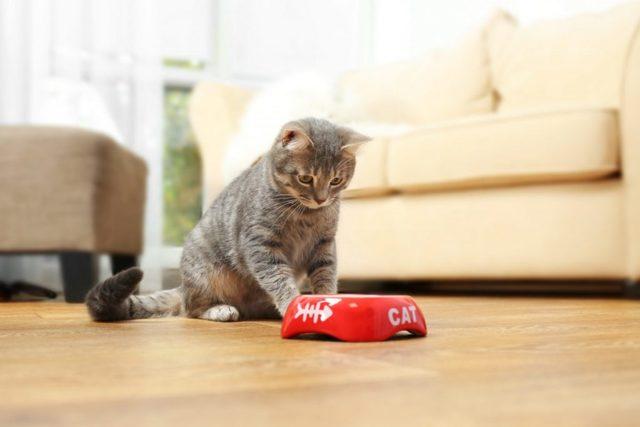 4 причины почему котенок плохо ест - что делать