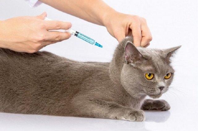 Лигфол для кошек – инструкция по применению