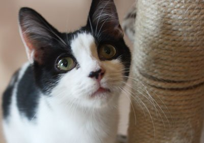 Причины почему кот смотрит в стену