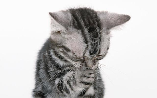 Кошка чихает и сопли - чем лечить