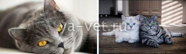 Опухоль на шее у кота - причины и лечение