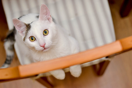 10 причины крови в кале у кошки - диагностика и лечение