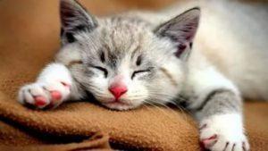 7 причин акне у кошек - симптомы, лечение, профилактика