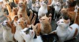 Гликопин для кошек: инструкция по применению