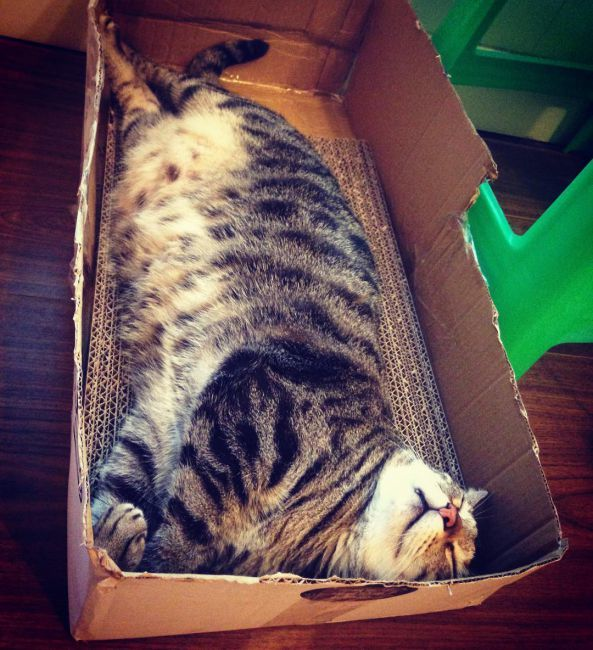 Кот сильно похудел от стресса