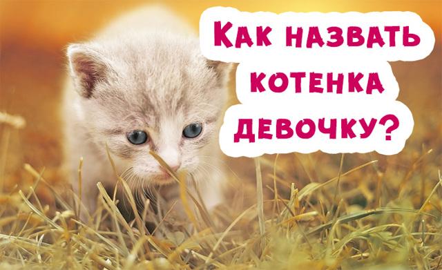 Как назвать котенка девочку - красивые имена