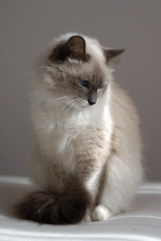 Как отучить кота от Вискаса - способы обучение