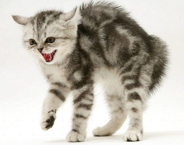 Как приучить кота к улице - методы приучения