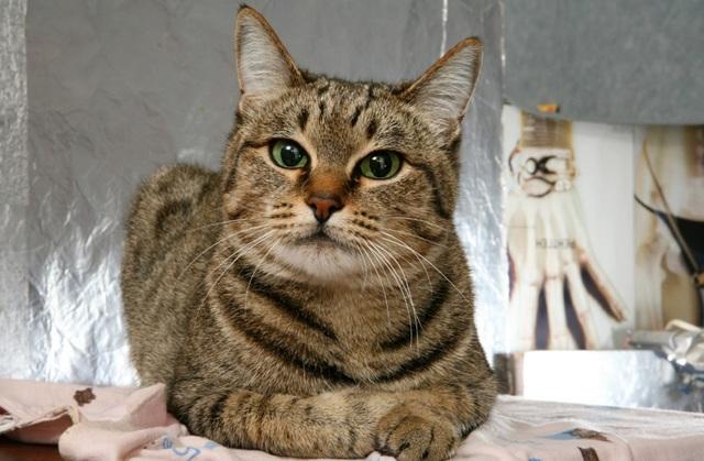 Энтерол для кошек: инструкция по применению