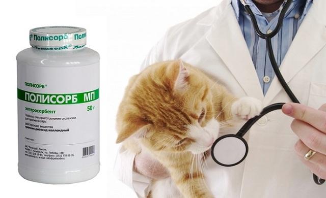 Полисорб для кошки: инструкция по применению