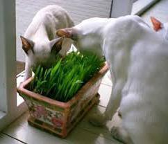 Что дать коту от рвоты - лечение кошки